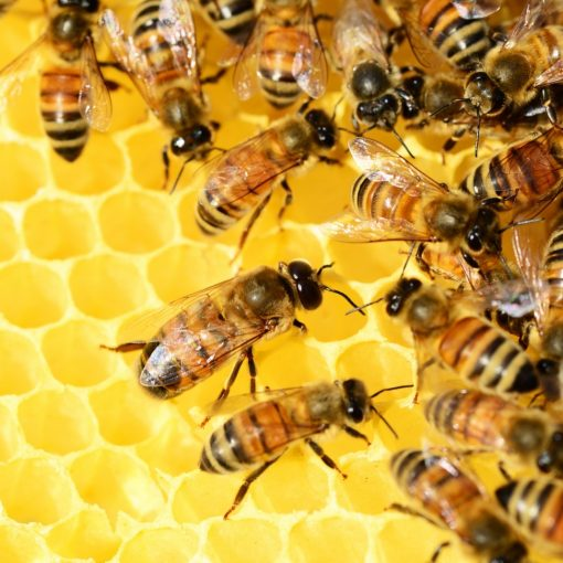 honey-bees-beehive-honey-bees-swarm-of-bees-1