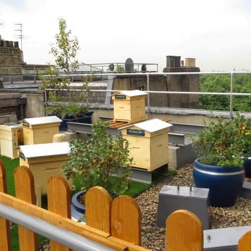 Beehives on Roof